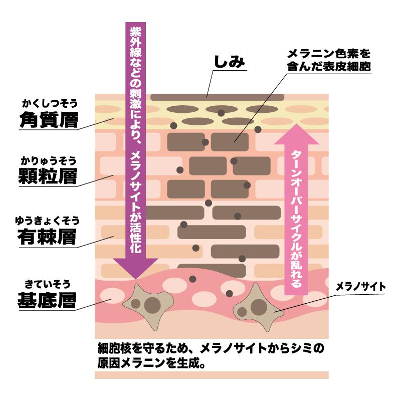 くすみ、シミ(肌のコラーゲンを増やす)|サルチル酸マクロゴールピーリング|ゆうスキンクリニック皮膚科